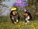 04.05.2019 Der H-Wurf feiert seinen 1. Geburtstag