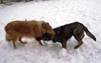 Clyde-Januar-2010-10