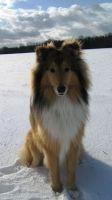 Comanche-Januar-2010-6